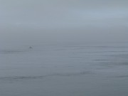 orcas-foggy-passing-3